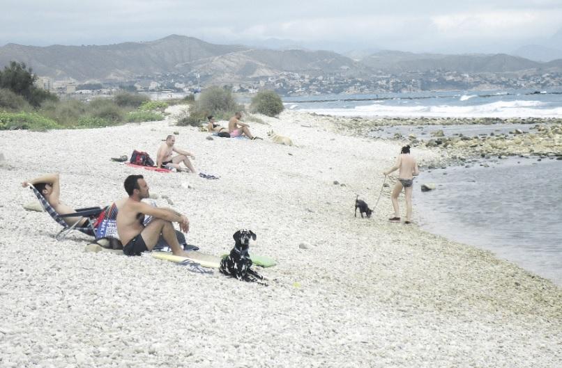 plaża z psem