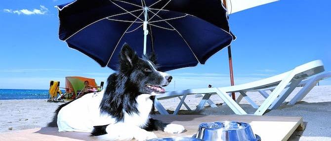 Plaże w Alicante na które można się wybrać z psem